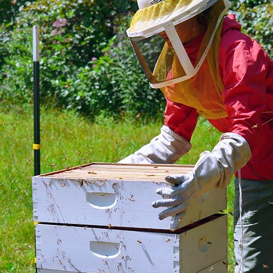 About_2column_MTOS_2013_OrganicGarden_Bees_0048
